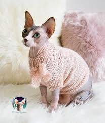 ropa gato sphynx