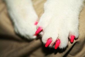 uñas de gato: caps nail